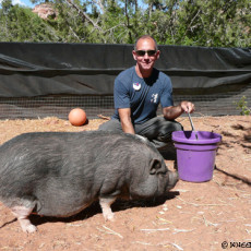 2nd Day in Dog Town – A penchant for pigs