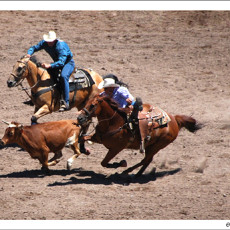 Cheyenne Frontier Days – Rodeo big daddy!