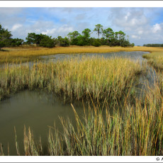 The Lowcountry of the Carolinas