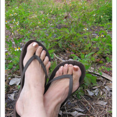Travelling w/ The Weather -> The Flip Flop Barometer