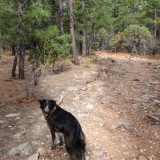 SP Campground Review – Manzano Mountain State Park, NM