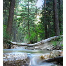 Tales of a Babbling Brook – Red River, NM
