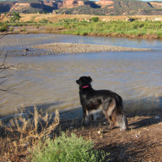 SP Campground Review – James M Robb State Park, Fruita, CO