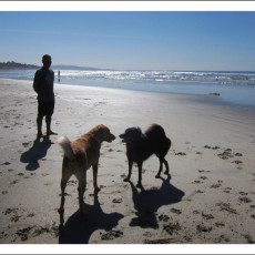 Paw Friendly & Off-Leash Beaches – San Diego, CA