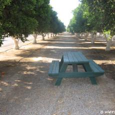 RV Park Review – Orange Grove RV Park, Bakerfield, CA