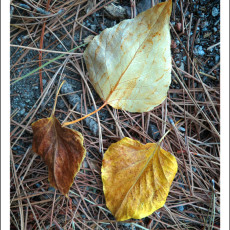 First Inklings Of Fall Colors – June Lake, CA