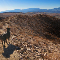 A Few More Dog-Friendly Hikes – Desert Hot Springs, CA