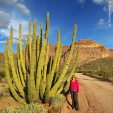 Long-Fingered Cacti & Bumpy Rides -> Organ Pipe Cactus National Monument, AZ
