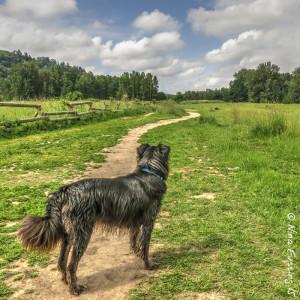 """""""Doggie Paradise"""" at Sandy River Delta Park"""
