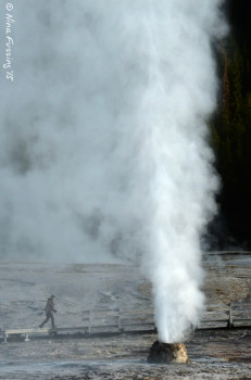 Beehive Geyser erupting ~200 feet. See the person?