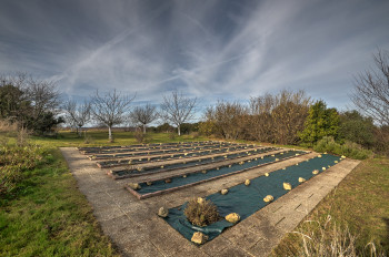 Vegetable garden and orchard