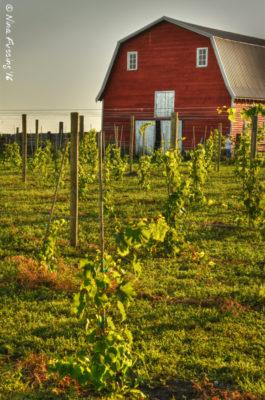 Gorgeous 4e Winery