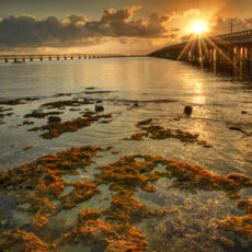 Wildlife, Bridges, Beaches & Friends – Middle/Lower Keys, FL