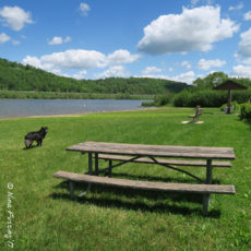 COE Campground Review – Ives Run Campground, Tioga, PA